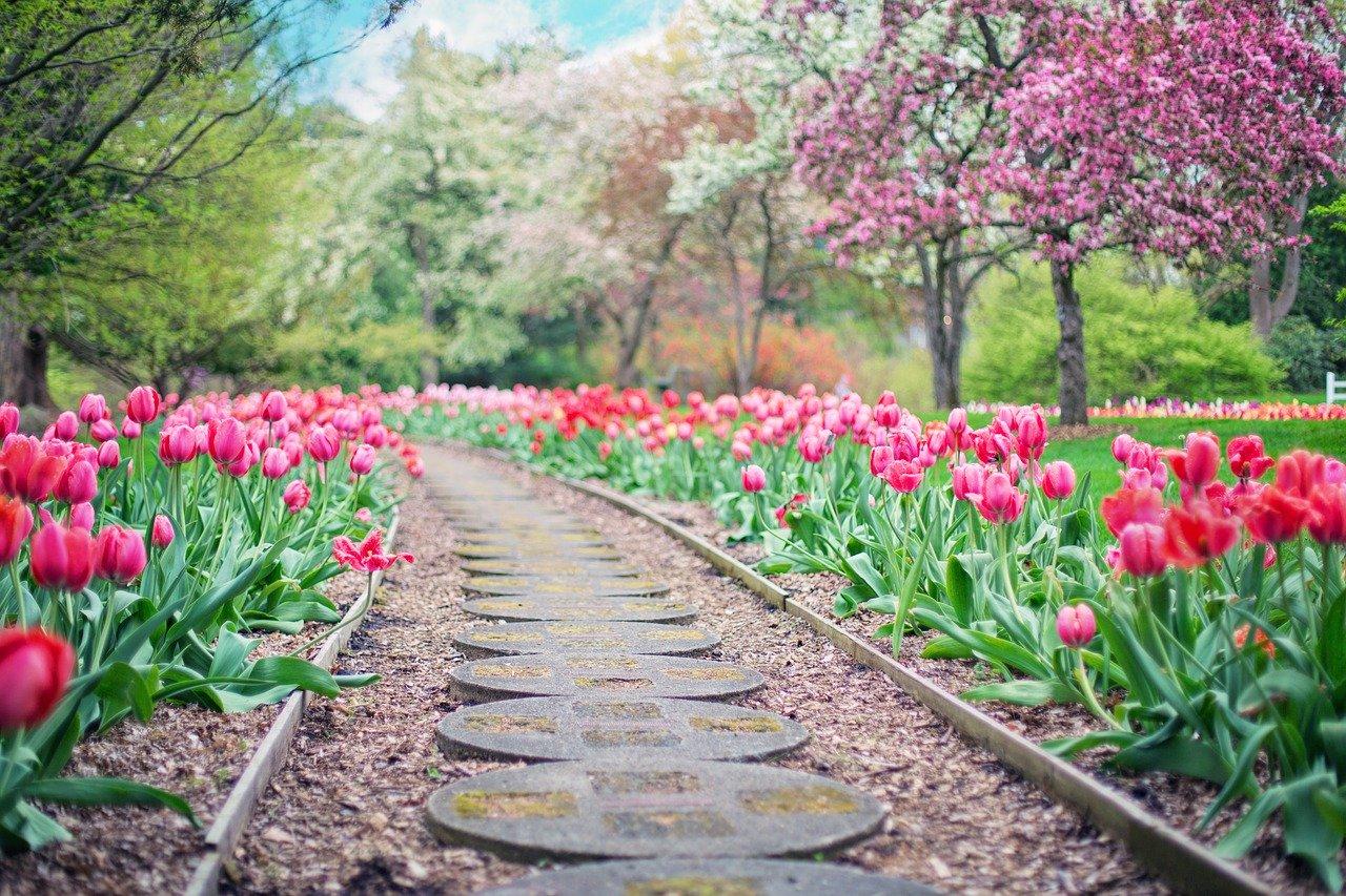 Blog ogrodniczy – jak zrobić rozsadę?
