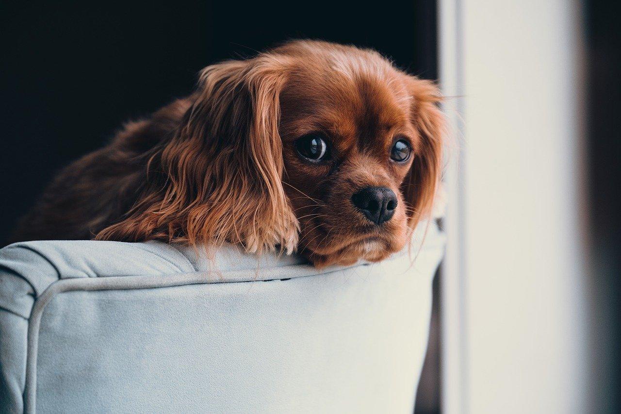 Jak uszyć legowisko dla kota lub psa