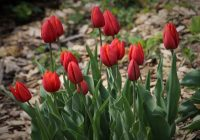 Kwiaty w ogrodzie – jak o nie dbać?